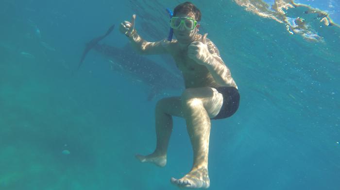 Whale_shark_cebu