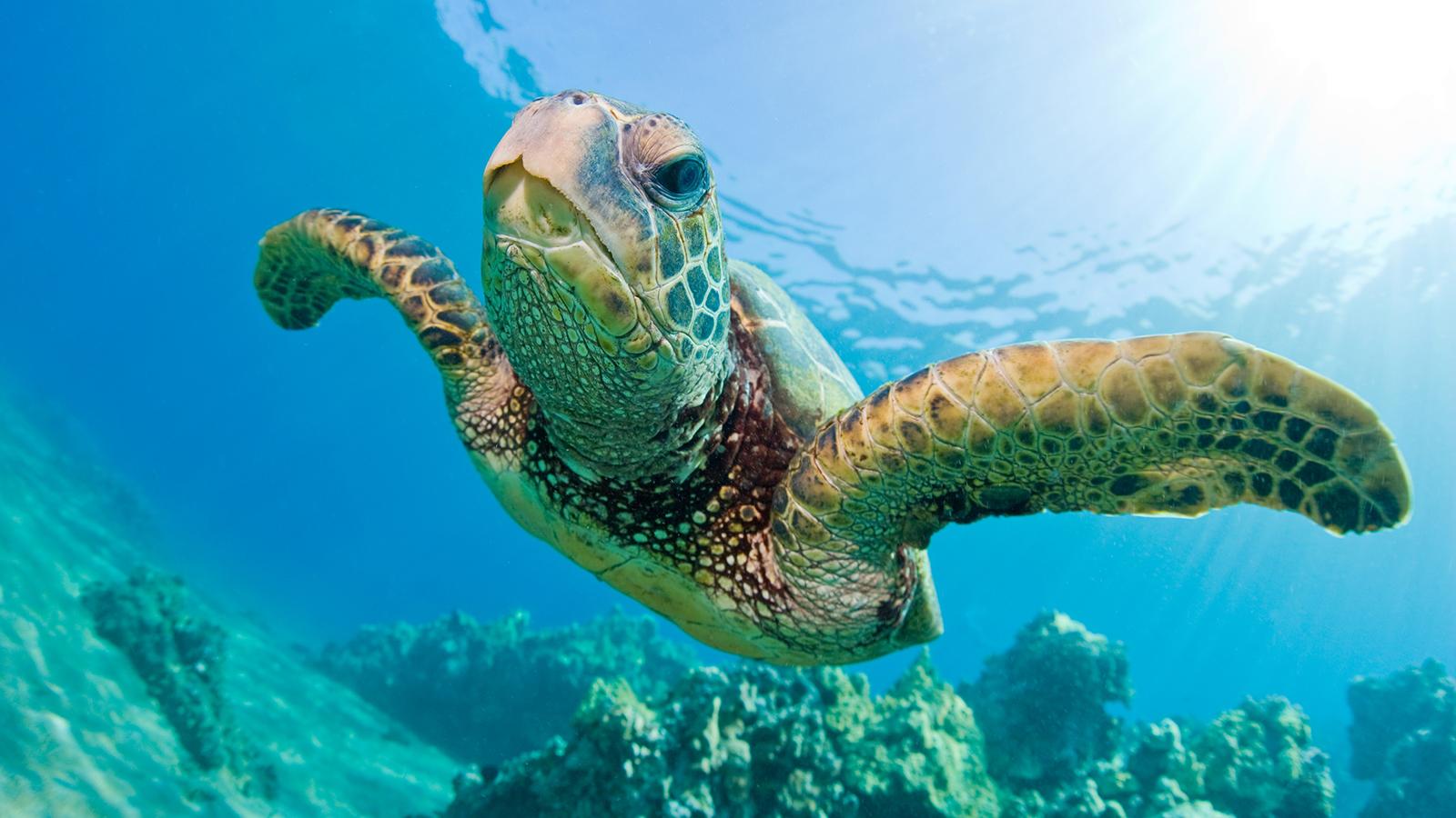 Черепахи острова Баликасаг