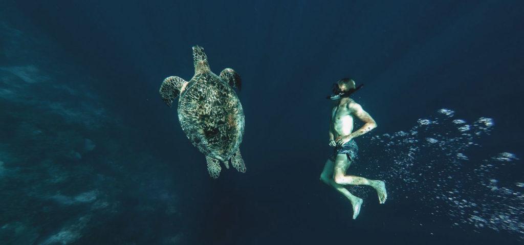 черепахи баликасаг